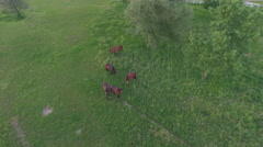 AERIAL: Group of domestic horses pasturing on meadow field on horse ranch Stock Footage