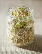 A jar of germinating sprouts Stock Photos