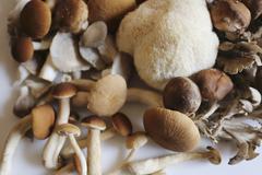 Maitake, shitake, piopinni, oyster and lion's mane mushrooms Stock Photos