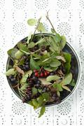 A bowl of aronia berries with leaves Stock Photos