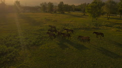 AERIAL: Horses on green grass field in dramatic sunny morning before the storm Stock Footage