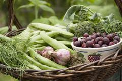 A harvest arrangement featuring broad beans, garlic, broccoli, dill and a bowl Stock Photos