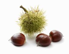 Chestnuts and a prickly case Stock Photos