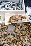 Spiny dye murex, scallops and sardines at a fish market in Venice Stock Photos