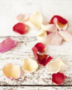 Edible rose petals Stock Photos