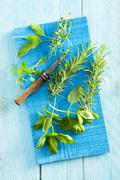 Fresh rosemary, basil, thyme and sage Stock Photos