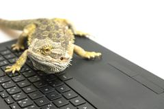 Agama lizard on the notebook Stock Photos
