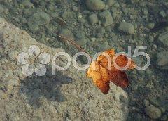 Autumn leaf background Stock Photos