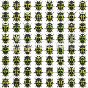An illustration of 64 different little bugs Stock Photos
