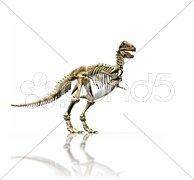 T-rex skeleton Stock Photos