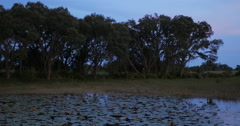 Florida Lake with Lilypads at Dusk Stock Footage