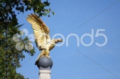 Golden eagle in London UK Stock Photos
