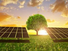 Solar energy panels and tree on meadow at sunset. Stock Photos
