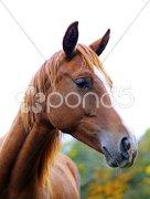 Brown horse Stock Photos