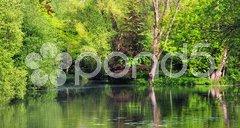 Green trees and lake Stock Photos