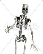 Skeleton Stock Photos