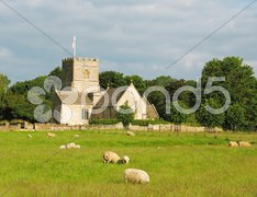 Field with sheep Stock Photos