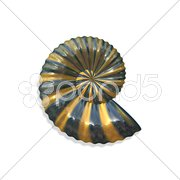 Isolated shell Stock Photos