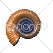 An illustration of a detailed sea shell Stock Photos
