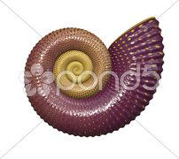 An illustration of a high detailed sea shell Stock Photos