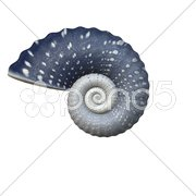 An illustration of a beautiful sea shell Stock Photos