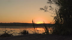 Amazing sunset at river with seaweed. 4K Stock Footage