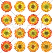 An illustration of some isolated different flowers Stock Photos