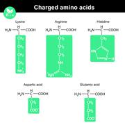Amino acids with marked radicals, charged Stock Illustration