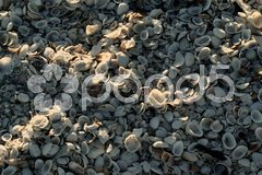 Muscheln am Strand Stock Photos