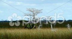 Everglades Stock Photos