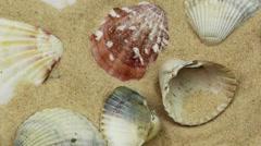 Sea Creatures and Shellfish hd  Stock Footage