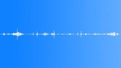 Animals Chimpanzee Int Medium Close Up Excited Vocals With Movement & Occasiona Sound Effect