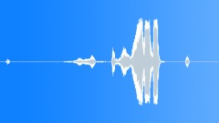 Animals Coyotes Int Close-Up Howls & Whines Loud Frenetic Barks @ Tail Mic'd In Sound Effect