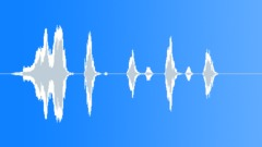 Animals Coyotes Int Close-Up Loud Yelps Give Way To Series Of Barks Mic'd Insid Sound Effect