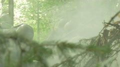 Soldiers move a Anti tank gun though a forest and make it ready to fireing Stock Footage