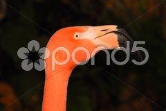 Flamingo Y2 Stock Photos