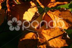 Herbst Stock Photos
