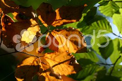 Herbstlaub Stock Photos