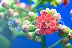 Makroaufnahmen einer roten Blüte Stock Photos