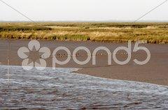 Die Nordseeküste bei Varel the northsea coast Stock Photos