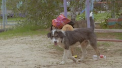 Stray dogs pick up food slow motion video Stock Footage