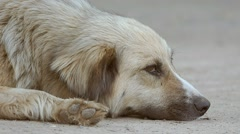 Stray dog lies on the ground muzzle slow motion video Stock Footage