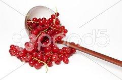 Rote Johannisbeeren und Schöpfkelle Stock Photos