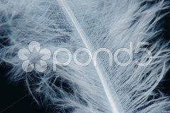 Blaue Feder vor Schwarz Stock Photos