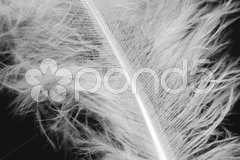 Weiße Feder vor Schwarz Stock Photos