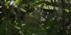 Cat prowling in forest Stock Footage