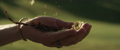 Woman sprinkling sunflower petals on her hand Stock Footage
