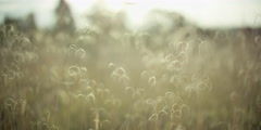 Crops swaying in the breeze on a sunny day Stock Footage