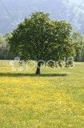 Baum freistehend solo Stock Photos