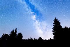 Pine trees silhouette Milky Way Stock Photos